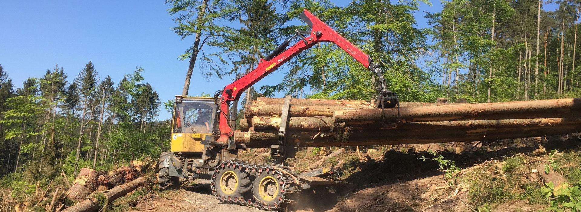 Holzeinschlag-Holzrueckung