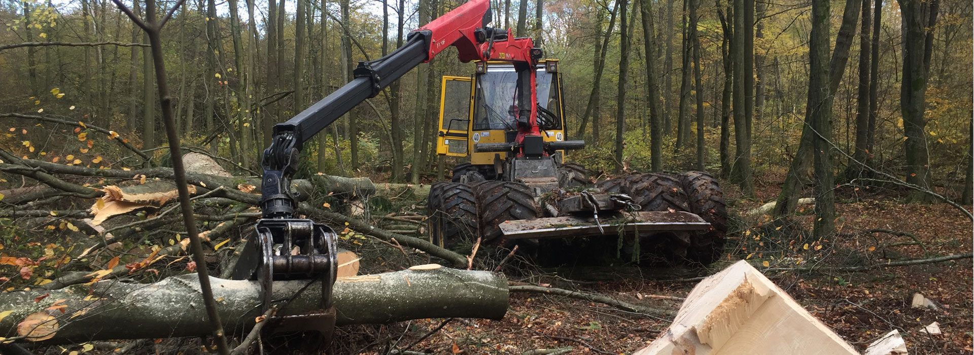 Holzeinschlag-Holzrueckung-1
