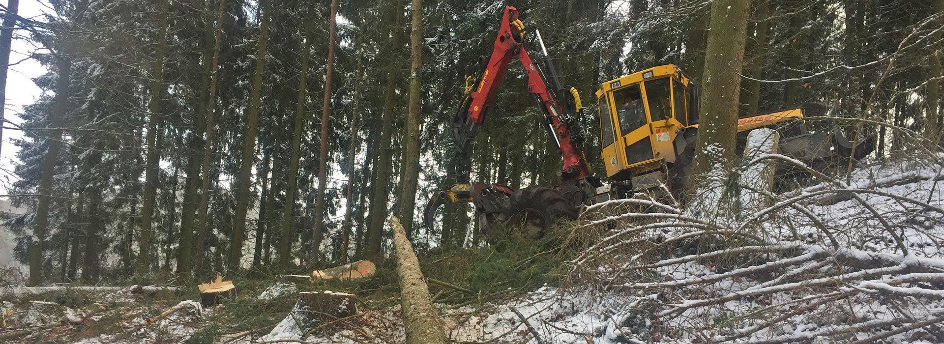 Holzeinschlag-Holzrueckung-2
