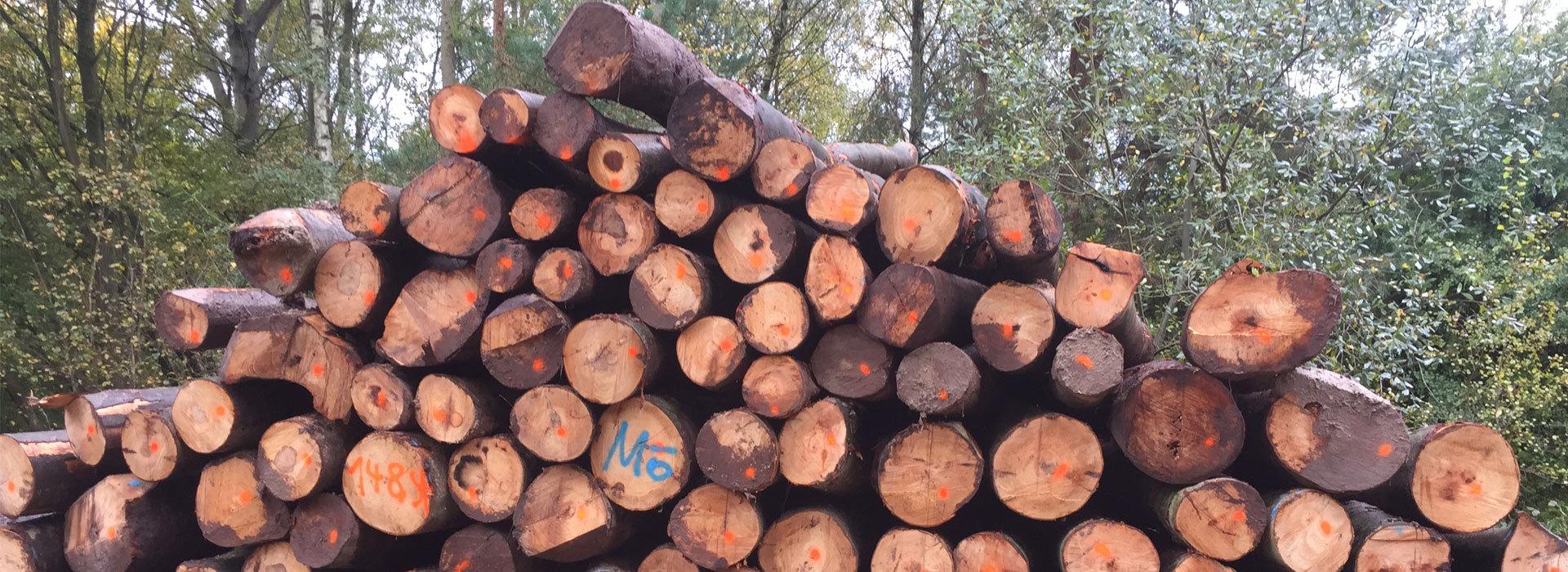 Holzverkauf-Selbstwerbung