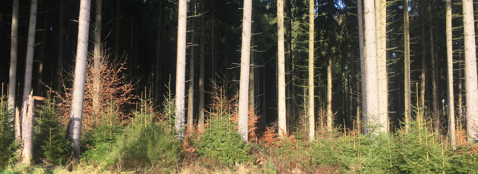 Betreuung-von-Waldbesitzern-komplett-1