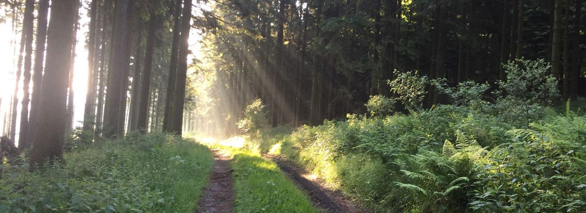 Verkehrssicherung-Waldwege