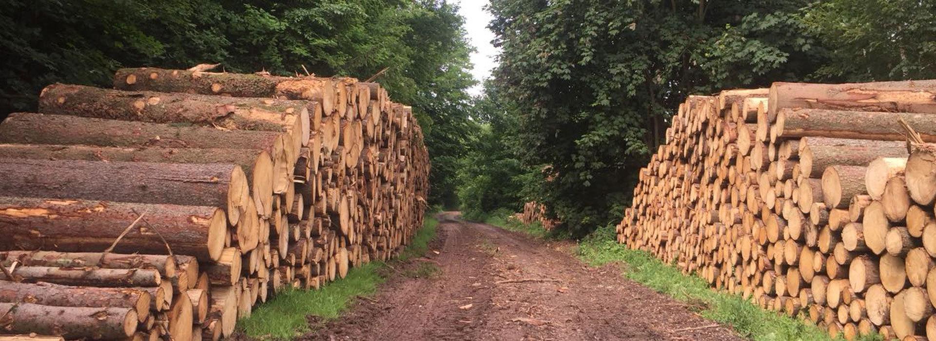 Holzverkauf Selbstwerbung Staatliche U Private Waldbesitzer